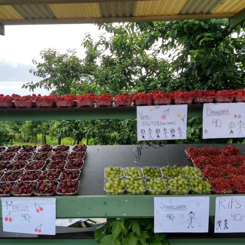 Askvik Frukt og Bær